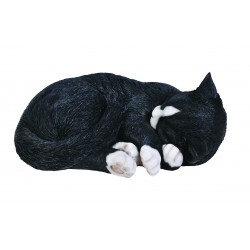 Katten zwartharig (2-delig)