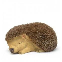 Slapende baby egel